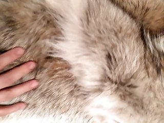 سکس گی my fur fetish sex toy  hd videos bear